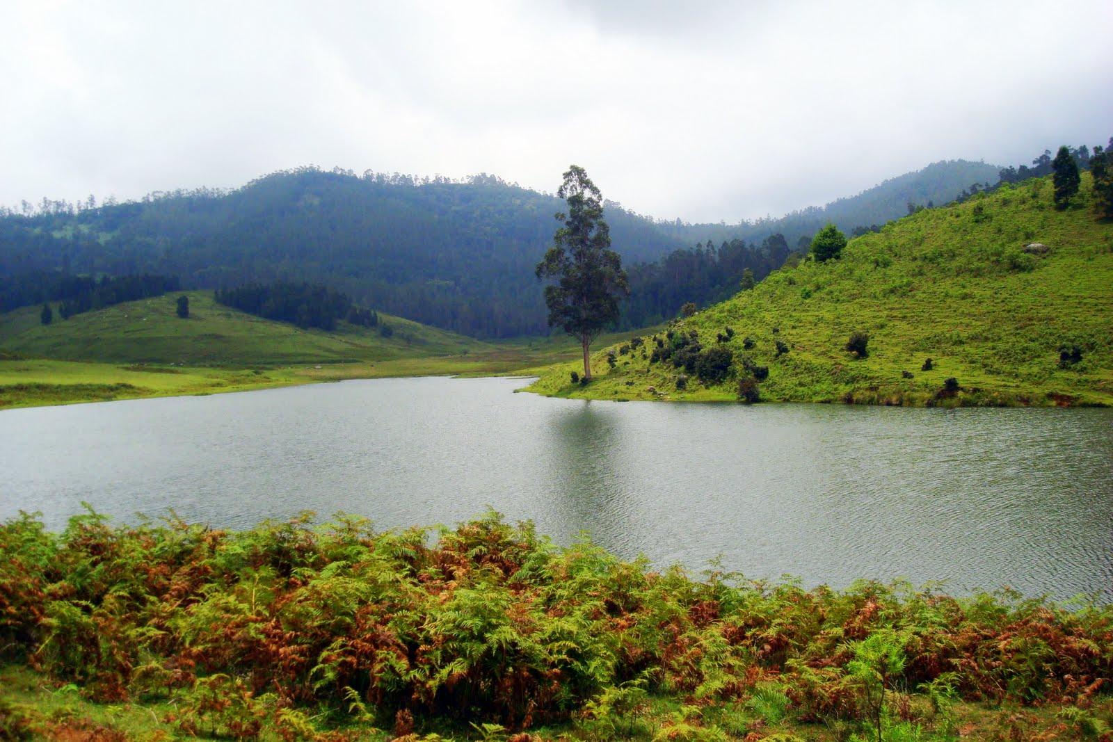 to the hills of kodaikanal The village sits atop a plateau on the palni hills beneath it, in the valley, is the  5km wide kodaikanal lake surrounding it are the western.